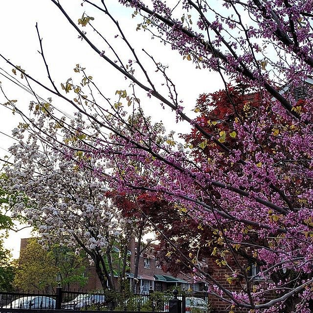 The colors the colors #dawn #dusk #nyc #bronx #bloom #trees